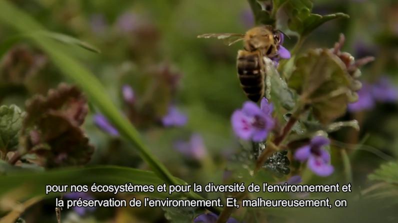 La biodiversité est essentielle